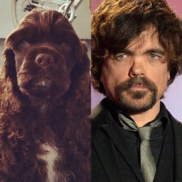 cani che assomigliano a personaggi famosi - TheGiornale.it