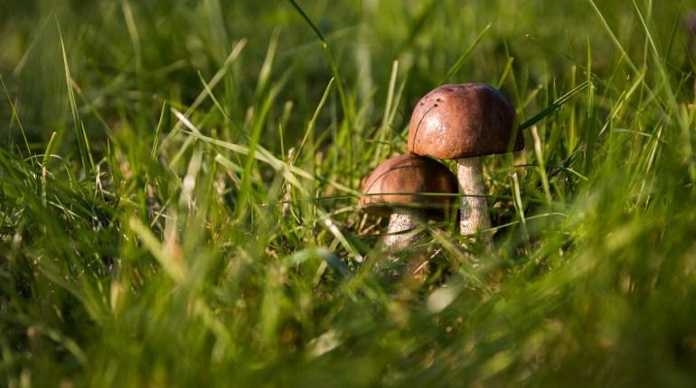 Trovare i funghi - TheGiornale