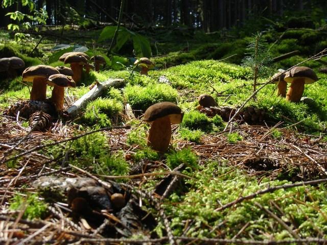 conservare i funghi - TheGiornale