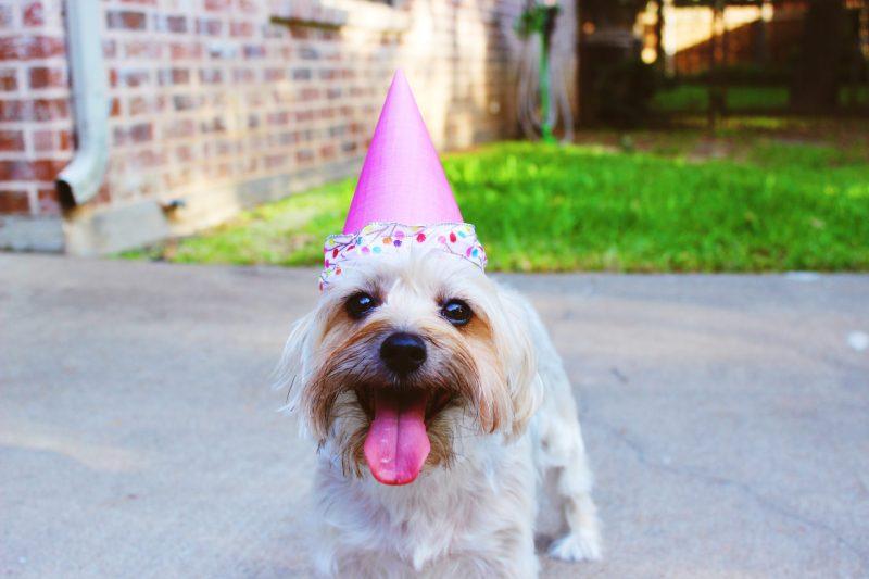 festa di compleanno per un cane