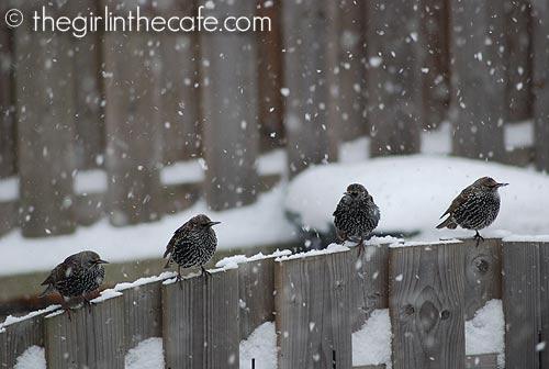 Winter - December 2010