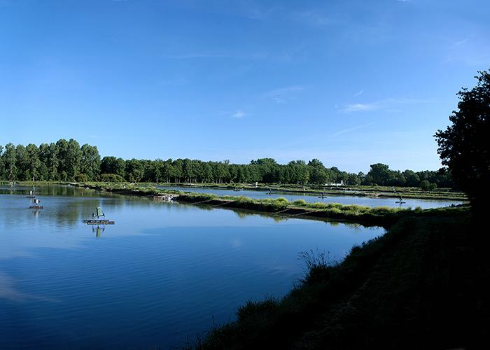 Caviar Sturia's sturgeon farm