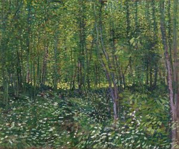 Trees and undergrowth Van Gogh Museum, Amsterdam