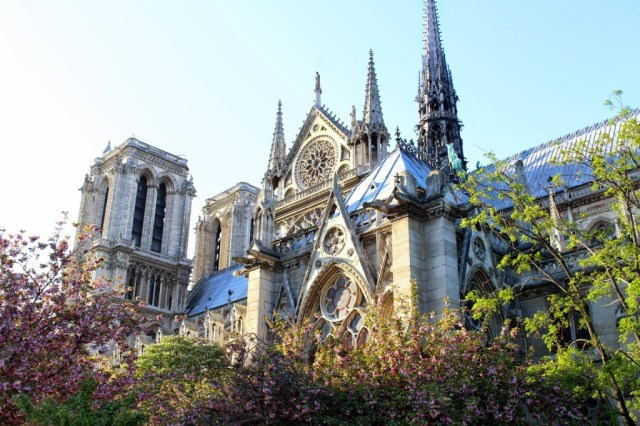 Cherry blossoms at Notre Dame