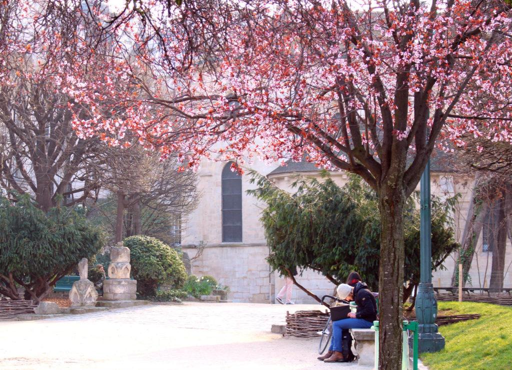 Cherry blossom Paris- Square Rene Viviani| The Glittering Unknown