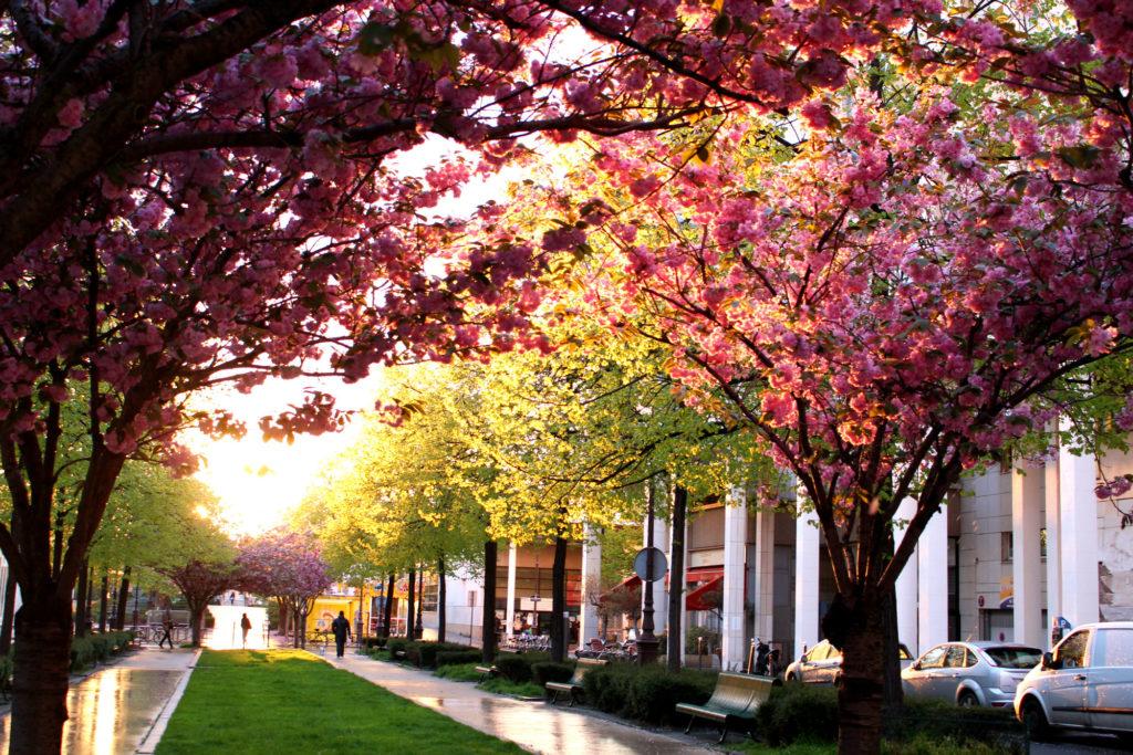 Cherry blossom Paris- Allee Vivaldi| The Glittering Unknown