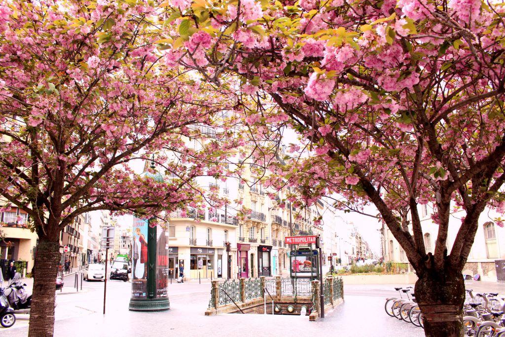 Cherry blossom Paris- Falguiere| The Glittering Unknown