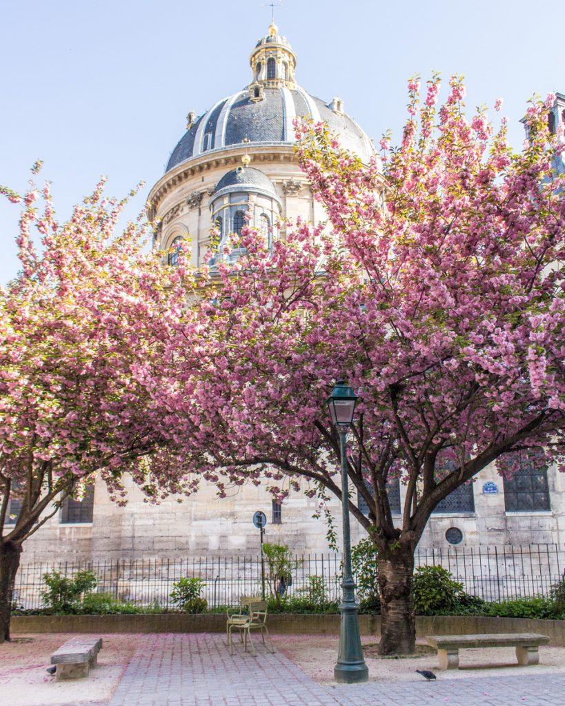 Cherry blossom Paris- Square Gabriel Pierné- THE GLITTERING UNKNOWN