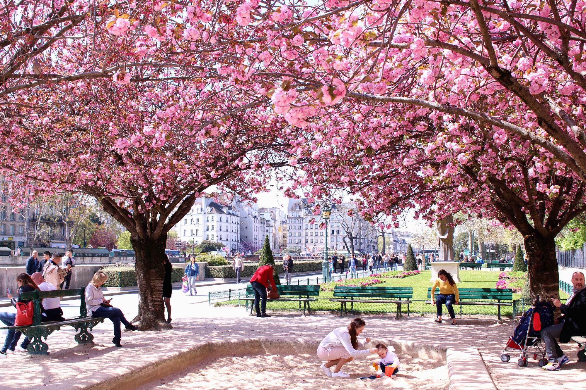 Complete Guide To Blossom Season In Paris The Glittering Unknown