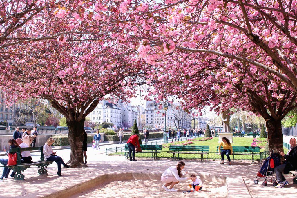Cherry blossom Paris- Square Jean XXIII| The Glittering Unknown