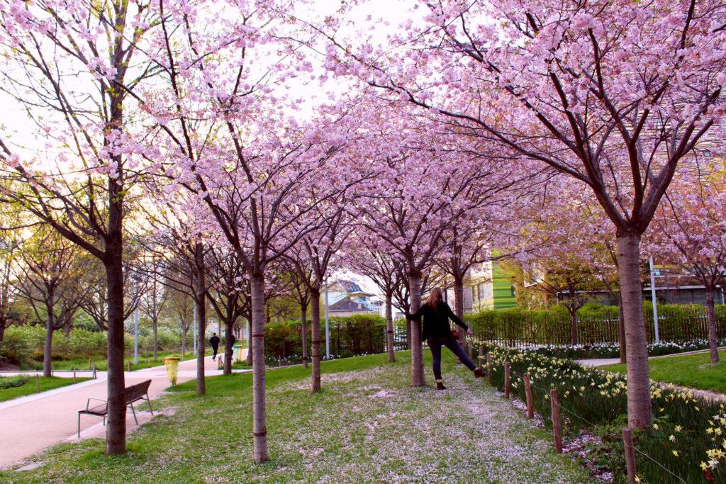 Cherry blossom Paris- Parc Clichy-Batignolles| The Glittering Unknown
