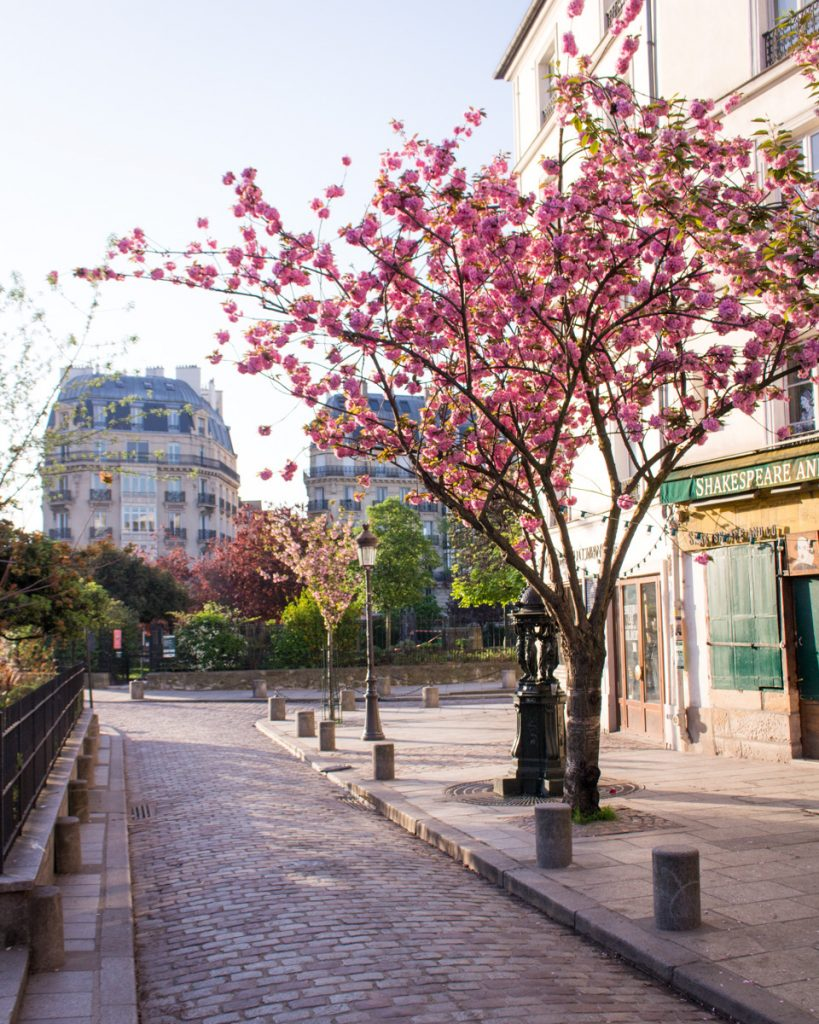 Cherry blossom Paris- Shakespeare & Co- THE GLITTERING UNKNOWN