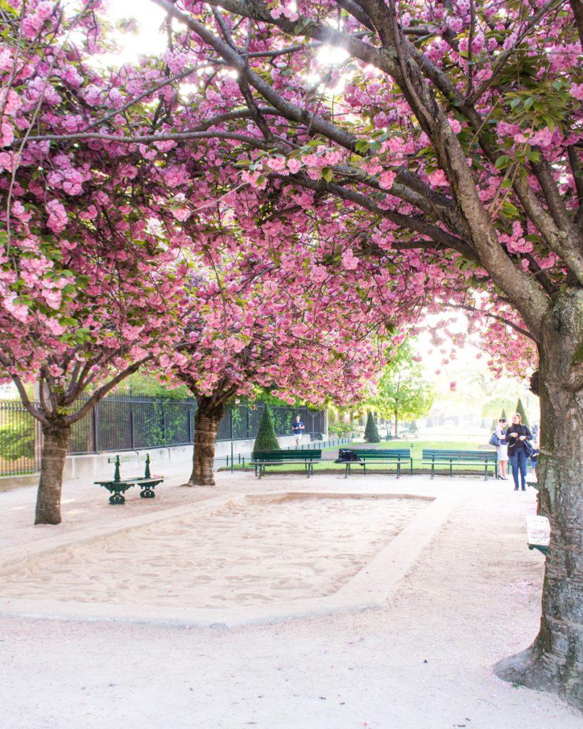 Cherry blossom Paris- Square Jean XXIII- THE GLITTERING UNKNOWN