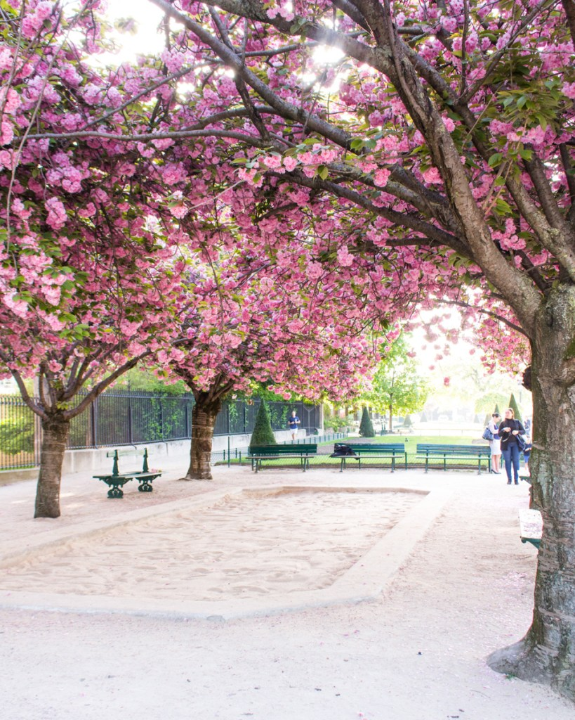 Cherry blossom Paris- Square Jean XXIII- THE GLITTERING UNKNOWN