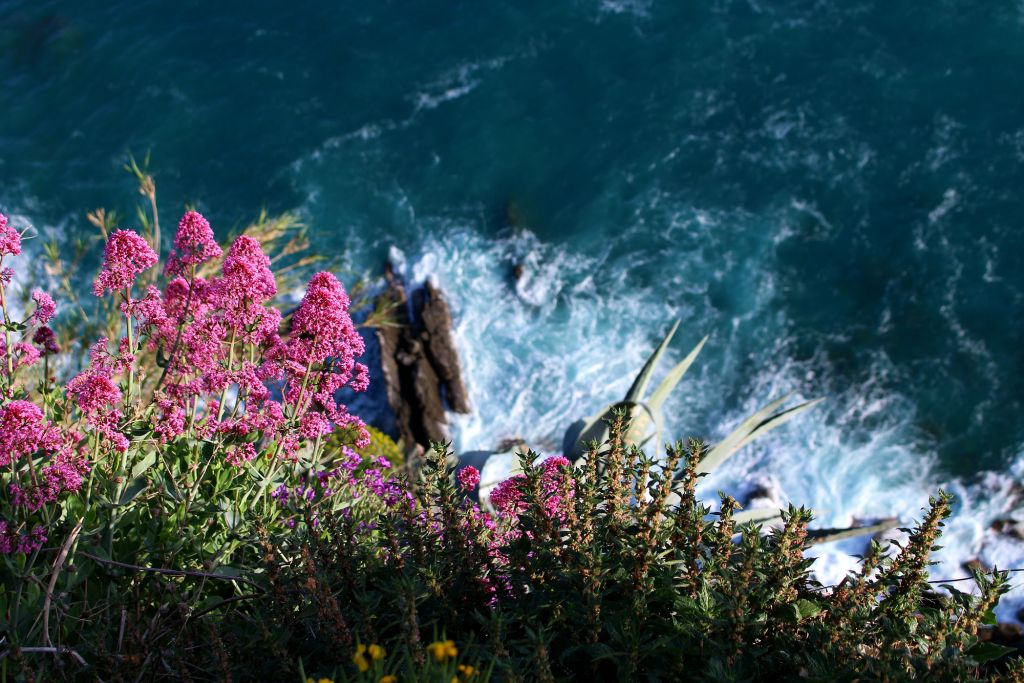 Flowers on a cliff Corniglia Cinque Terre Italy The Glittering Unknown