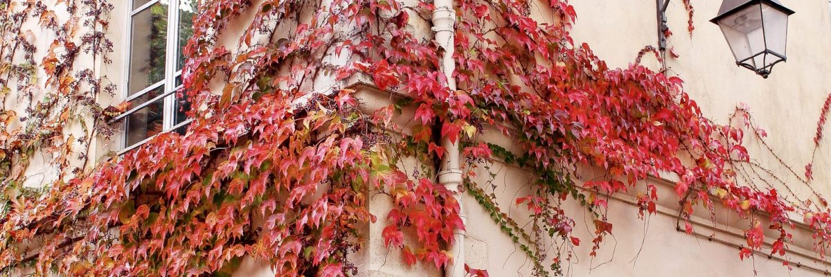 Where to Find the Best Fall Foliage in London and Paris