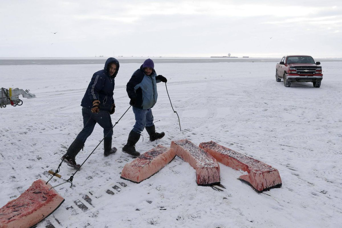 Climate Change Threatens Traditional Inuit Food Supply In