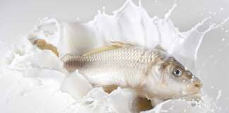 Drinking Milk With Fish Is Harmful of Not - Theglobepress