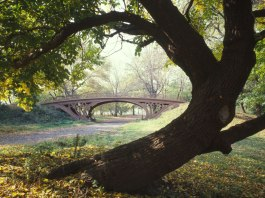a tree at centeral park new york