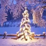 Christmas Tree Wallpapers for Windows 8 (5)