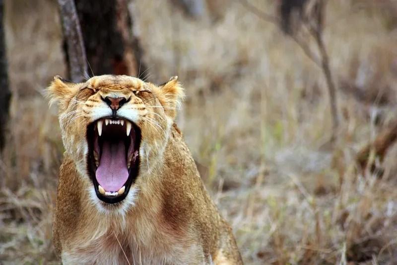 wildlife sanctuary south africa