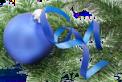 BLUE BULB - transp
