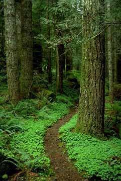 leave_a_trail.jpg
