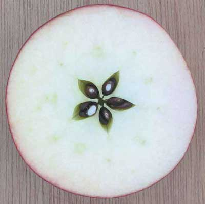 Image result for images of apple cut crosswise star of seeds