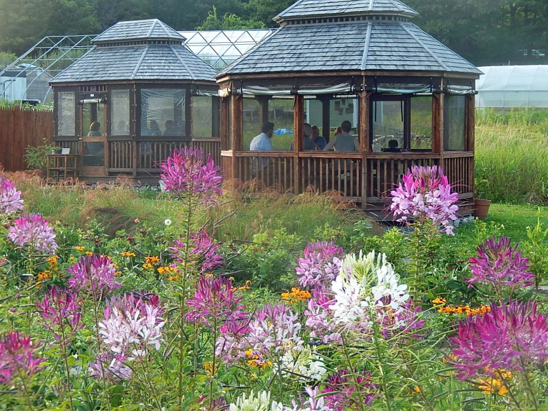As summer progresses the fields of flowers will surround the gazebos in a canvas of summer color