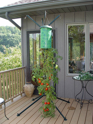 topsy 5 Ways For Apartment Dwellers To Grow Their Own Food.