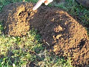 Animals That Cause Mounds In Yards EHow
