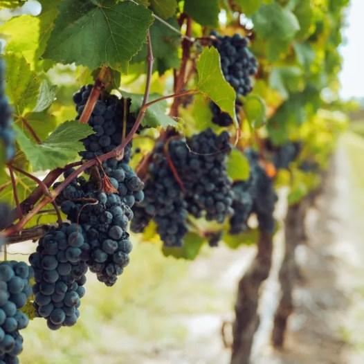 blog wine 1