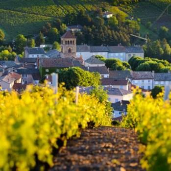 blog wine 3