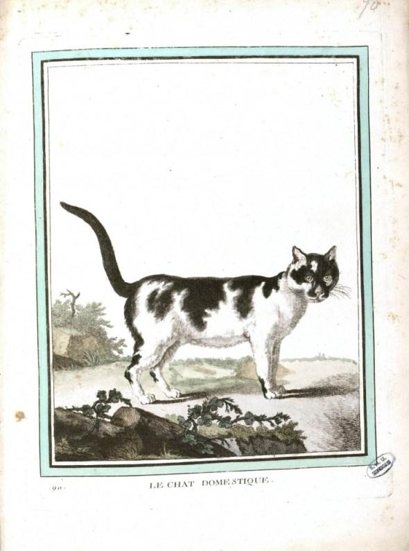 Buffon cat