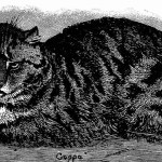 cat massacre