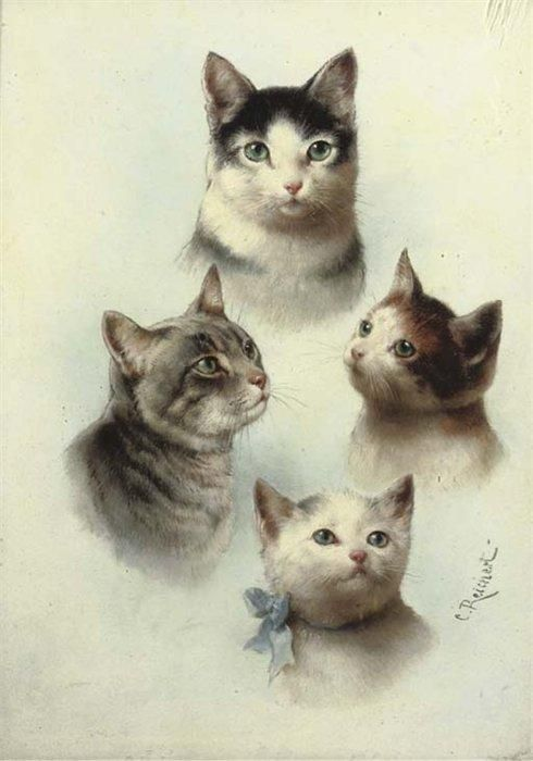 Study of Cats