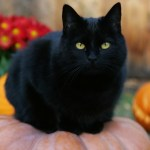 halloween and black cats, samhain