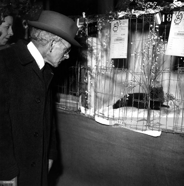 Admiring a Cat, Robert Doisneau