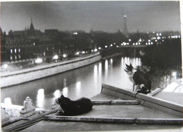 Paris Cats at Night, 1954 Robert Doisneau