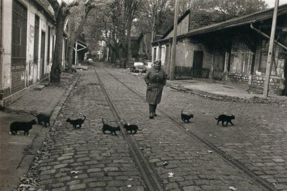 Robert Doisneau The Cats of Bercy, 1974