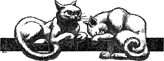 The Cats of Ulthar, HP Lovecraft,, 1920