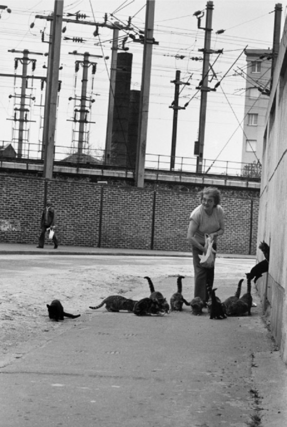 Woman Feeding Cats, 1953 Robert Doisneau