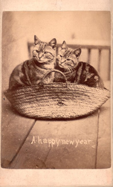 A Happy New Year, Harry Pointer
