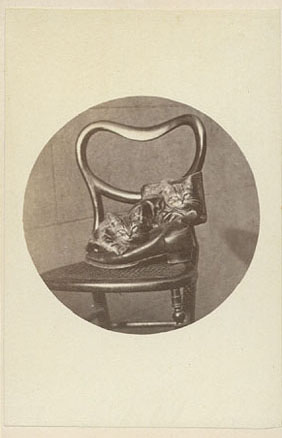 Brighton Cat series kittens in a shoe, Harry Pointer