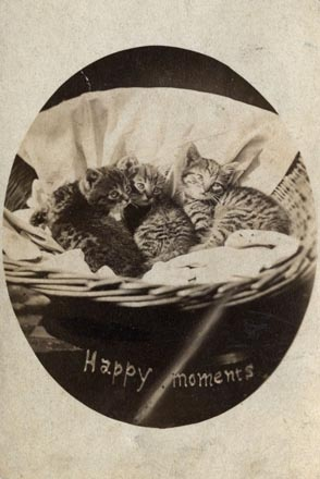 Happy Moments, a photograph of three young cats in a basket, a carte from The Brighton Cats series, Harry Pointer