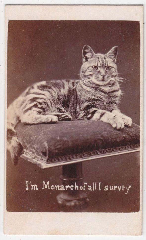 I'm Monarch of all I Survey, Harry Pointer