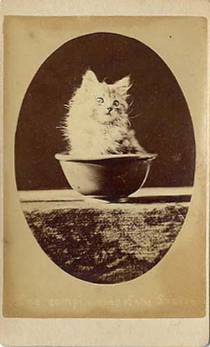 Kitten, Harry Pointer