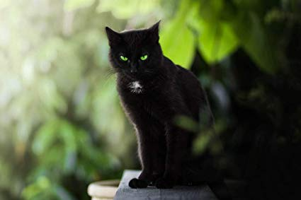 Seated black cat with green eyes, Jerome K. Jerome