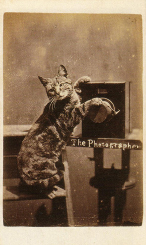 The Photographer, Harry Pointer