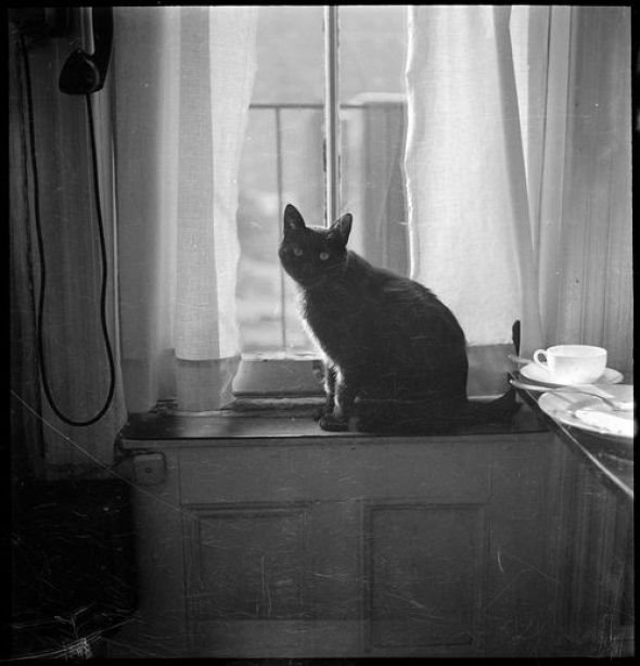 Walker Evans, 18 Views of Cat and Fire Escapes, New York City